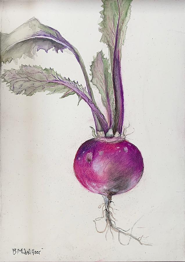 Barbara Willner Turnip
