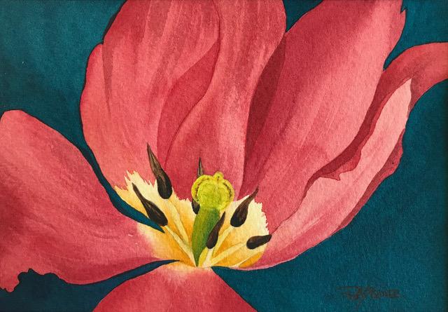 Rita Squire - Tulip Mania