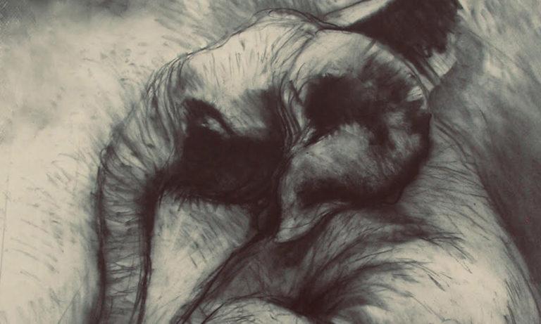 Jackie Rogers Charcoal Elephant