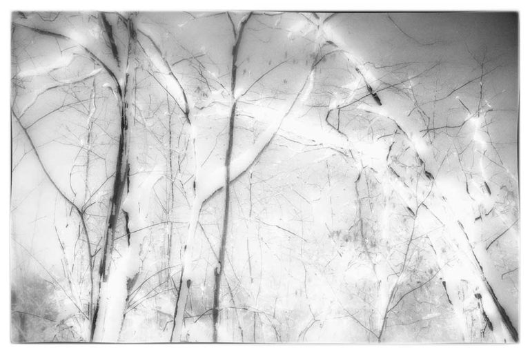 Neal Warshaw Snowy Branches