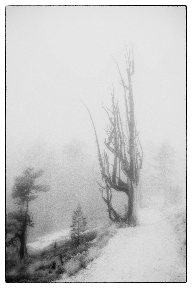 Neal Warshaw Tree Portrait #16