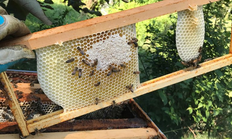 SymBeeOtic: Embracing a Life with Bees